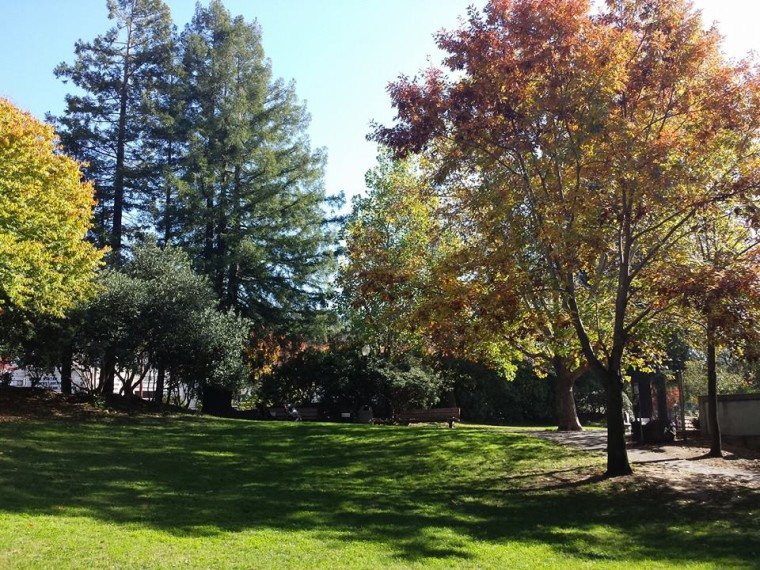 Photo of a park with grass and tall trees with Autumn colors